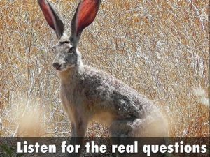 Rabbit with large ears: Listen for the real questions